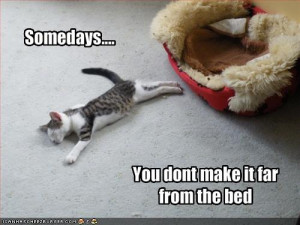 funny cats with funny sayings
