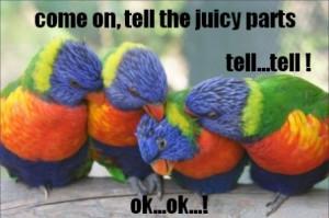 funny parrots picture funny parrots picture