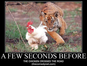 Why did the chicken cross the road [IMAGE]