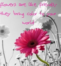 Flowers Are Like Friends They Bring Color For Your World