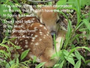 Baby Deer Dawn Abraham in Wildlife – Pamela quote
