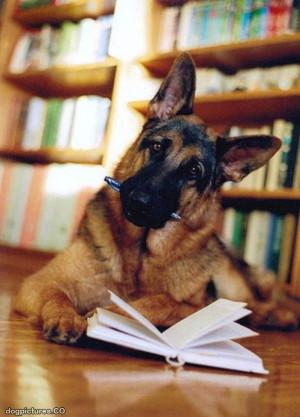 homework dog