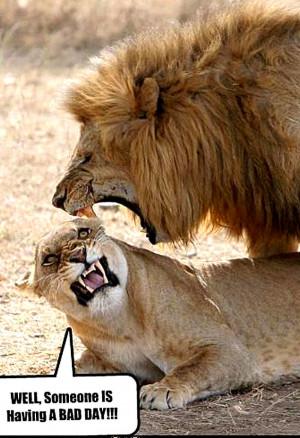 funny animals photos (9)
