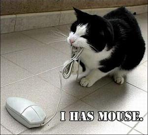 http://www.graphics99.com/funny-cat-with-the-computer-mouse/