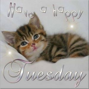 have-a-happy-tuesday-cat-picture.jpg#happy%20tuesday%20cat%20478x479