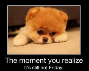 cute, dog, friday, funny, moment, puppy, quote, realize, sweet, text