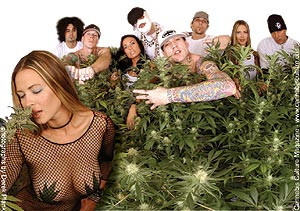 The Kottonmouth Kings weed quotes