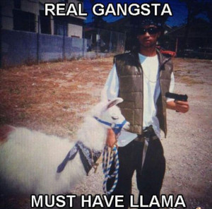 Real Gangsta Must Have Llama