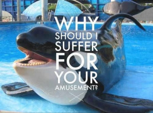 The movie @SeaWorld does not want you to see #Blackfish