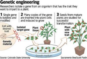 Goal 3 - Genetic Engineering Notes
