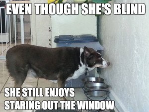 Even though she's blind… she still enjoys staring out the window