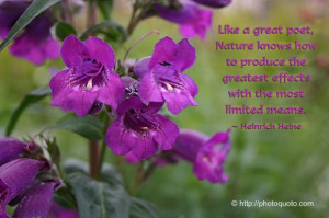 Like a great poet, Nature knows how to produce the greatest effects ...