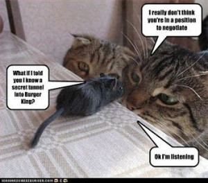 cat n mouse sayings | love LOL cats