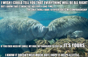Calming Manatee memeAnimal Pictures, Calm Manat, States Parks, Manat ...