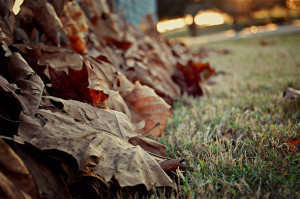 autumn, cold, fall, fence, field, florida, grass, leaves, nature ...