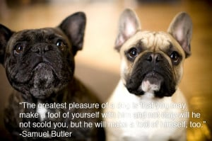 Back > Quotes For > Funny Animal Friday Quotes