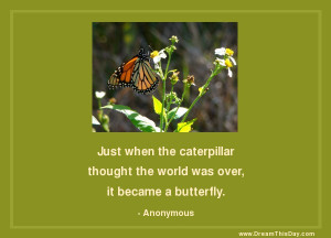 Inspirational Quotes about Butterfly