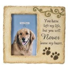 Pet Loss: Saying Goodbye To Your Pet ,I will NEVER go through the loss ...