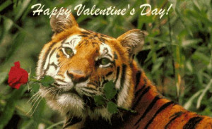 You're My Funny Valentine,Tiger