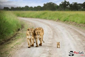 ... lion n family cute lion sayings for children cute lions with quotes