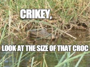 Funny Crocs (21 Pics)