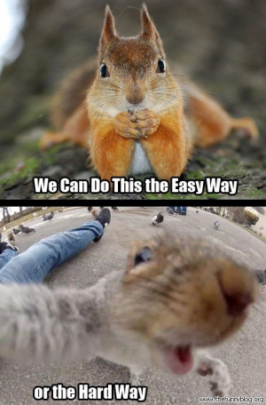 funny squirrel photos We Can Do This the Easy Way or the Hard-Way