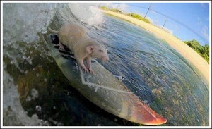 Funny Surfing (52)