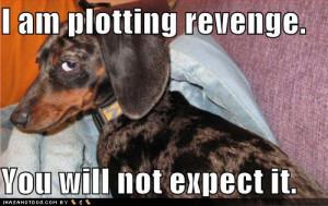 funny dog pictures plotting revenge - another GF revenge