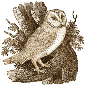 Wise Old Owl Nursery Rhyme & History'