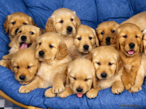Puppies Aaaaaawwwwwwwwww Sweet !!