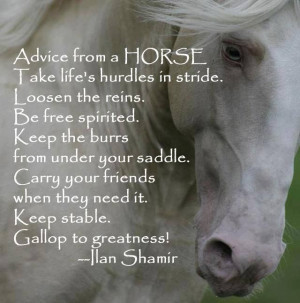 Good advice from your horse!