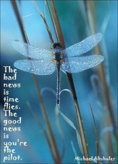 Dragonfly - love this quote More