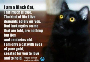 How you can help bring awareness on Black Cat Appreciation Day — and ...