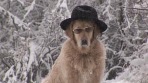HD Golden Retriever / Snow / Germany – Stock Video # 156-027-294