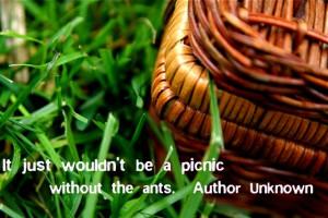 Picnic Quote