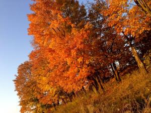 Autumn Quotes: 20 Inspirational Sayings About Fall + Photos