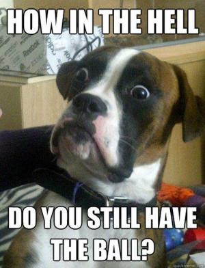 ... funny photos, funny meme, meme, funny dogs, dog, Best of Baffled Boxer