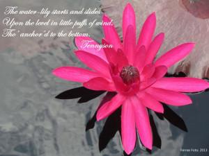 ... . IV. L. 236. Tennyson Descriptive, Gardens Quotes, Water Lilies
