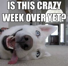 Is this week over yet funny quotes cute memes quote dog weekend days ...