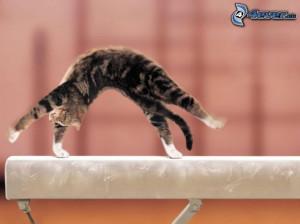 chaton , gymnastique