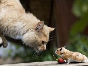 Funny Cat and Mouse Pictures