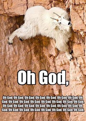 Panicking Rock Climbing Goat