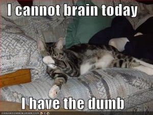 Image: funny-pictures-cat-cannot-brain-today_zps21afb9a4.jpg]