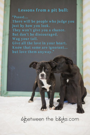 Lessons from a #pitbull. I want this quote framed for Jacky.