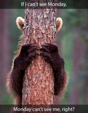 funny-Monday-morning-pictures-bear-hiding-his-eyes-W630