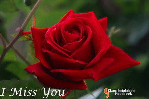 ... lonely without you where are you miss you so much miss you photos miss