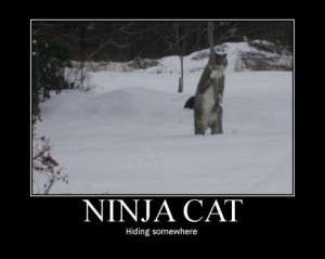 Scratch Ninja cat.. maybe thats where my motivation is hiding.....
