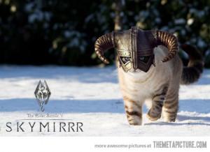Funny photos funny cat helmet medieval Skyrim