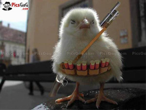 Cute Chick Funny Picture