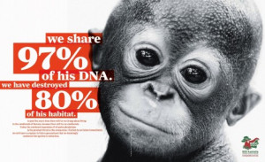 ... Channel's Expedition Granted: Save Wild Orangutans in Indonesia